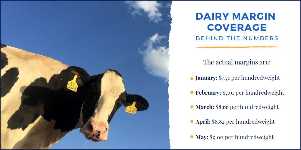 Dairy Margin Coverage margin numbers