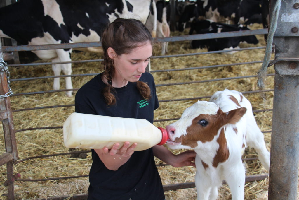 An intern and a calf
